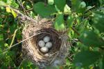 Приснилось Гнездо