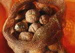 Приснился Грецкий орех