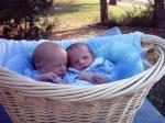 Приснились Младенцы